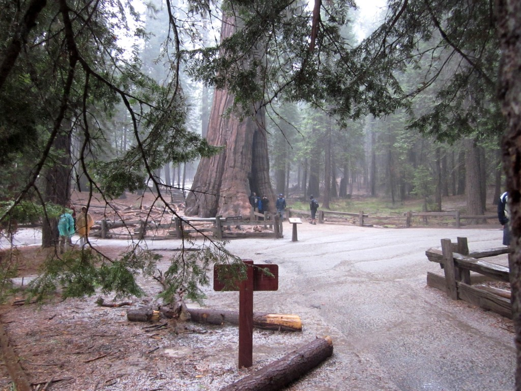 Hagel verrast ons in Sequoia NP