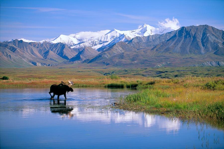 Denali NP in Alaska