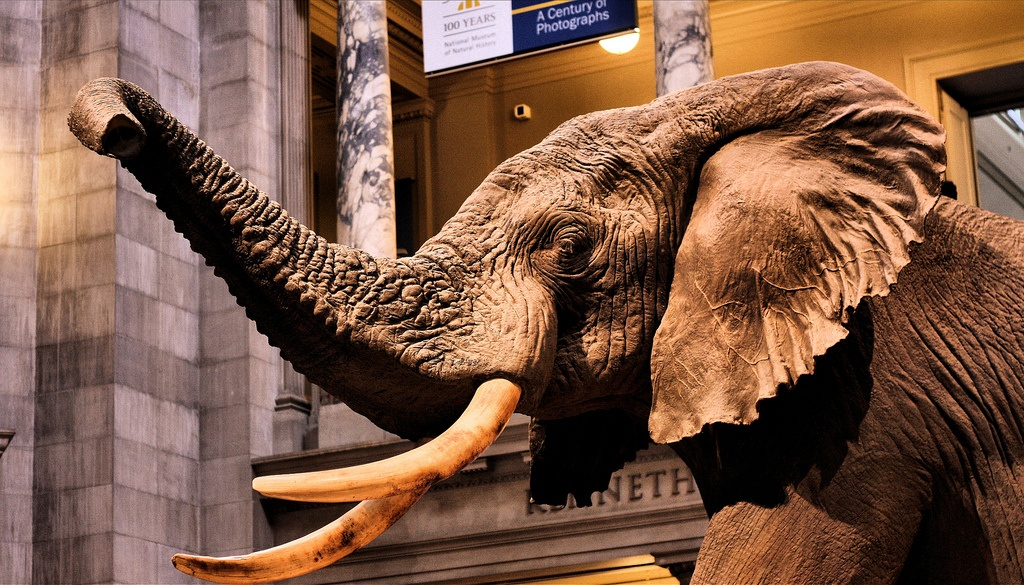 Smithsonian museum in Washington D.C.