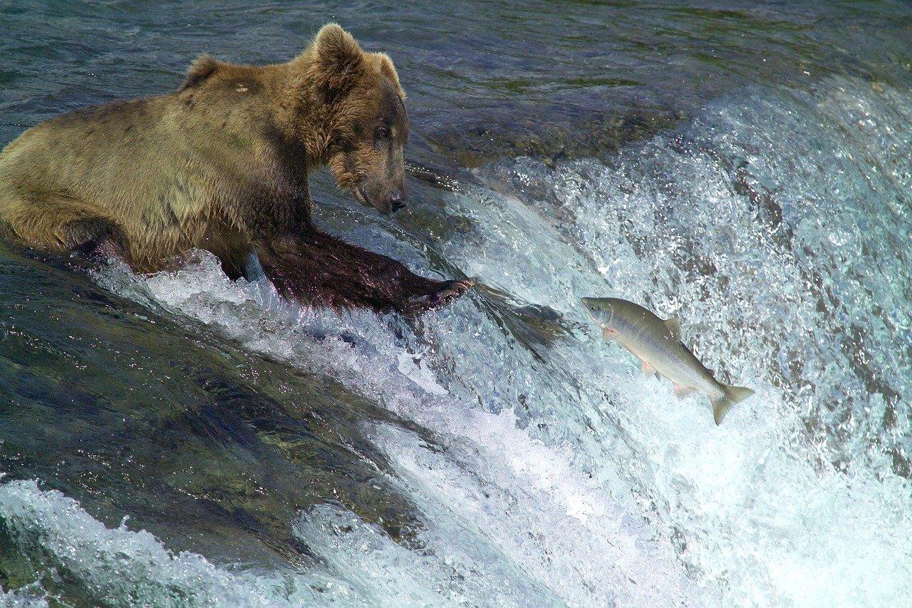 wilde dieren in alaska