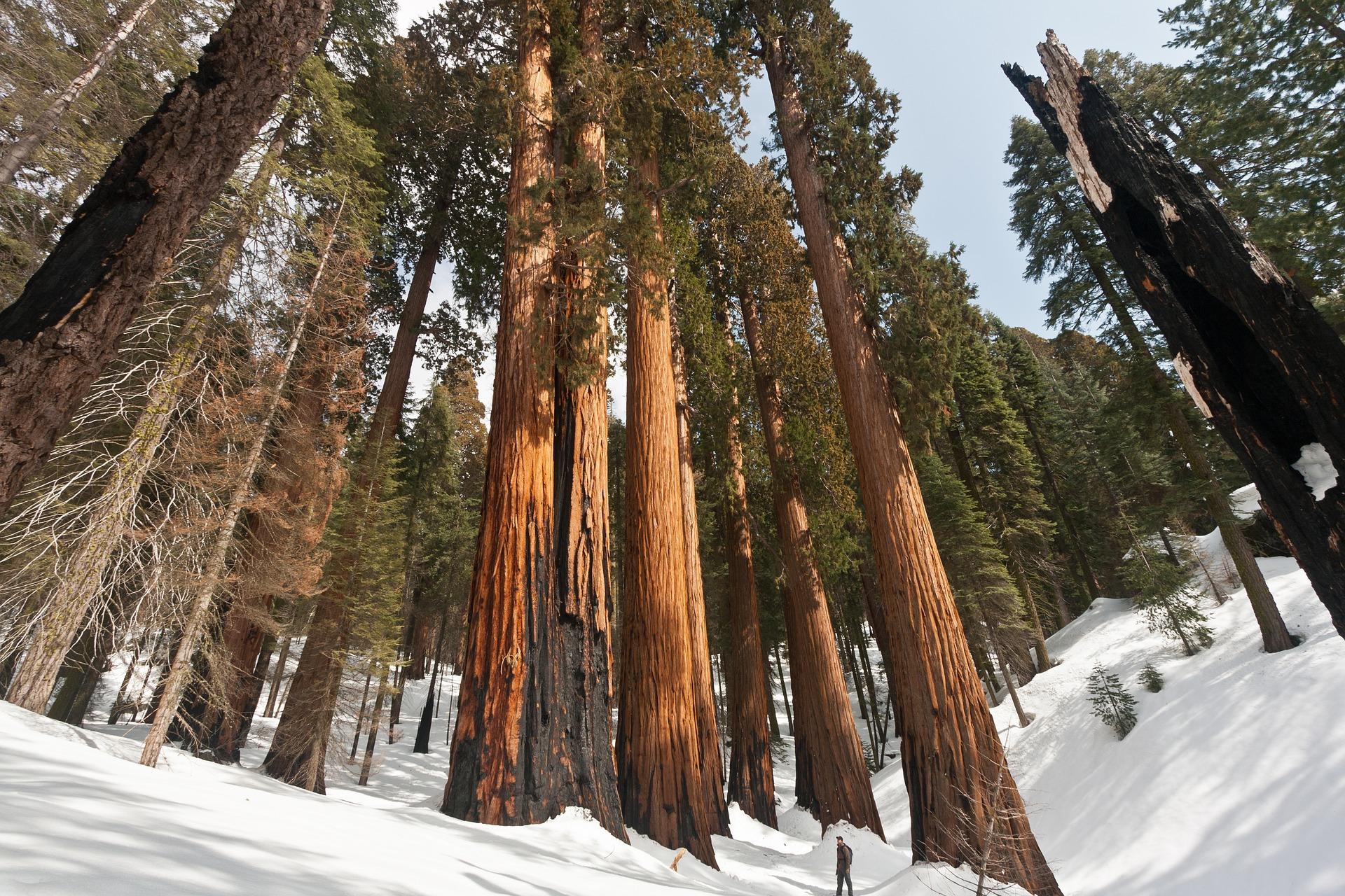 Sequoia National Park: de allergrootste bomen ter wereld